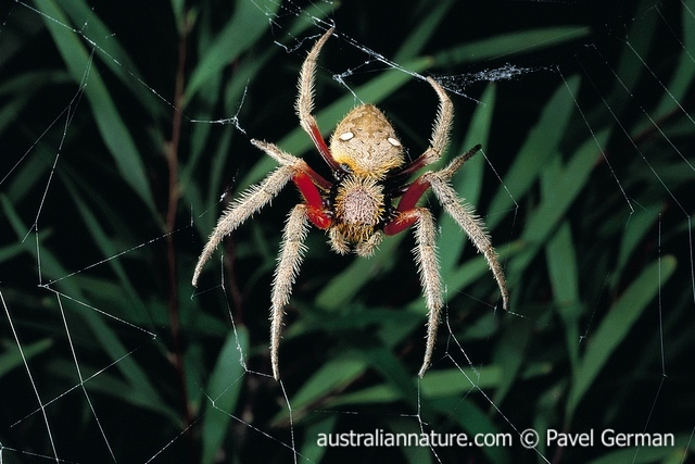 Spider Wildlife Images Nature Photography By Pavel German